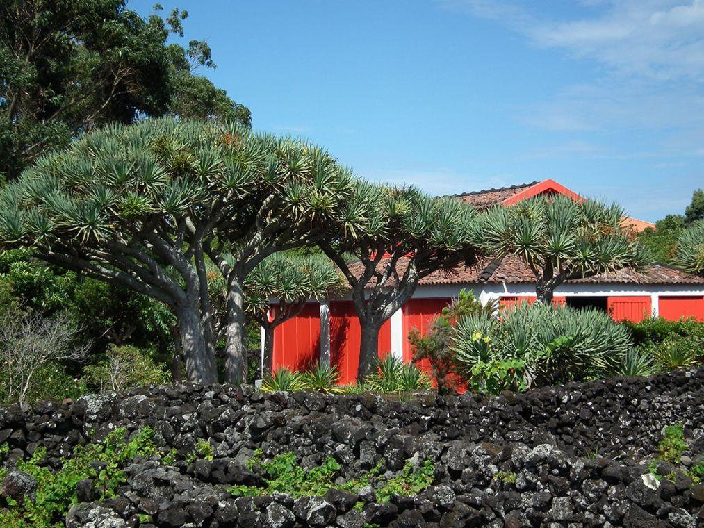 Azores Tours Canada