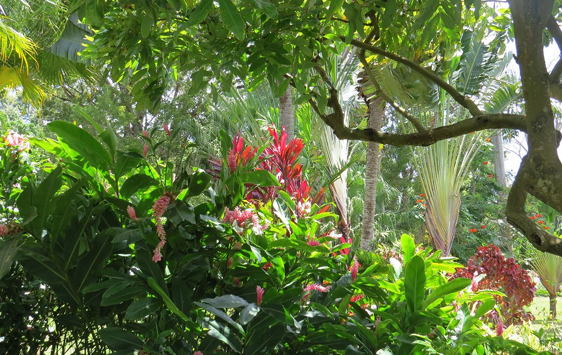 Gardens Of Grenada Tour Relaxing Walks Of The Spice Islands