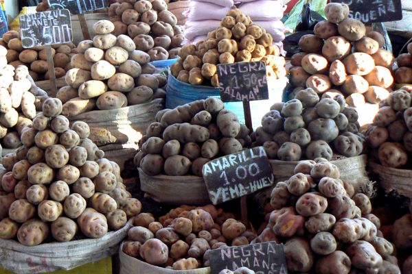 Variety of potatoes for sale in Arequipa market