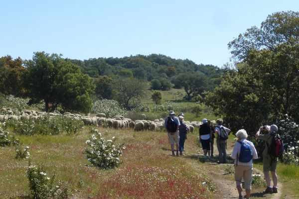 We take a circular walk amongst holm oaks and gum cistus in the Baixo Alentejo