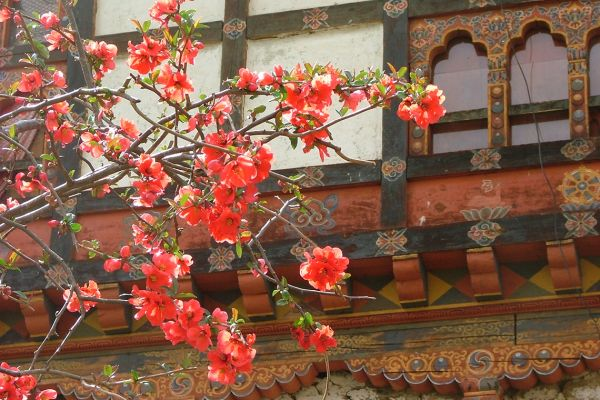 Blossom in the Bumthang valley, Bhutan