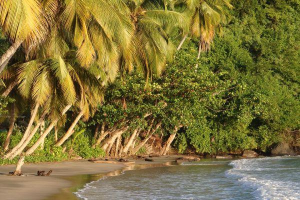 A sandy beach on Grenada