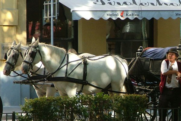 Horse carriage on the Ring, Vienna