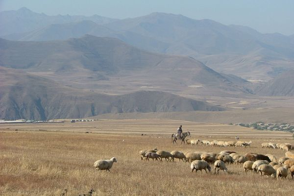 Herdsman and sheep, southern Armenia