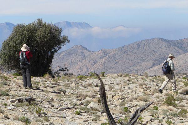 Walking in the Jebel Akhdar mountains, Oman