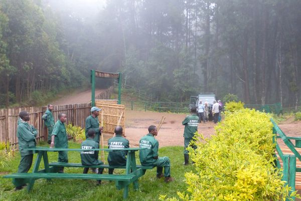 Nyungwe Forest National Park, start of the chimpanzee trek