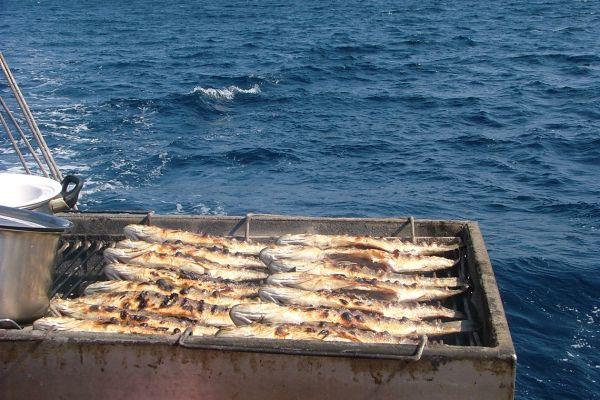 Fresh seabass on the grill, Croatia