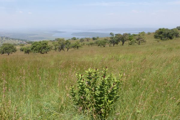 Akagera National Park, scenery seen from the Mutumba Hills