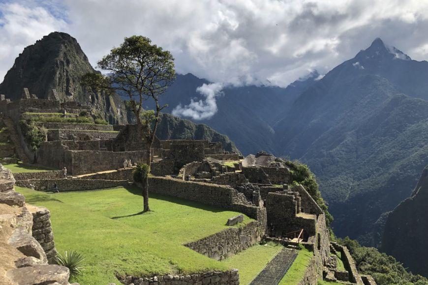 Peru Machu Picchu with tree