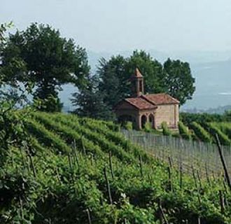 Orta vineyard