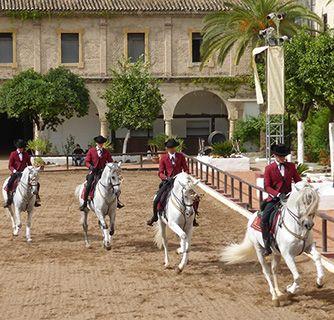 Andalusia 4 horses