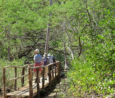 Costa Rica walk