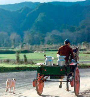 Azores milk cart