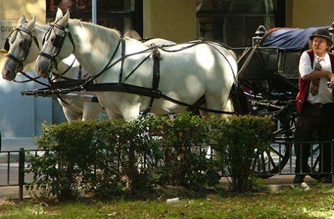 Esterhazy horse