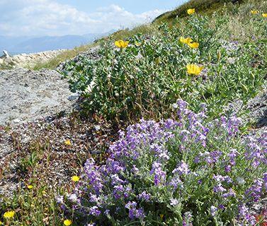 Corfu weeds
