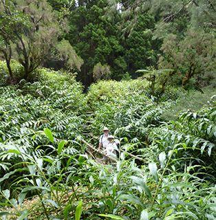 Reunion forest walk