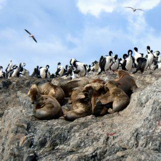 Patagonia seals