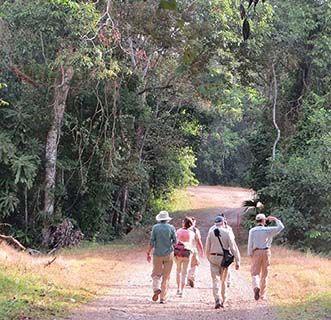 Panama walkers
