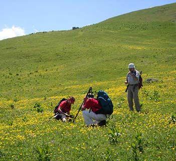 Montenegro botany